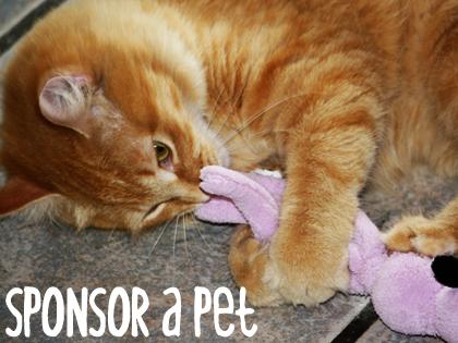 Sponsor a Pet